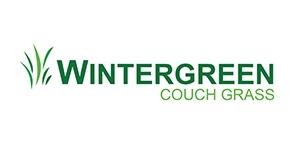 wintergreen couch grass